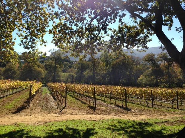 CitySightseeingBluetour Groot Constantia vineyard