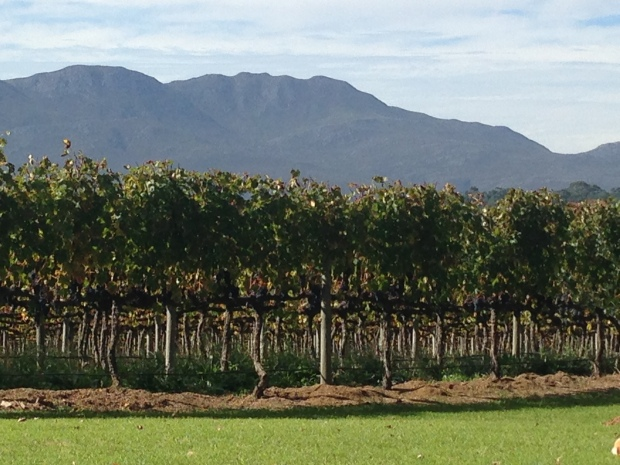 Belfield Wine Farm